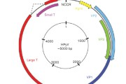From Stockholm to Malawi: recent developments in studying human polyomaviruses