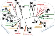 Phylogeny: Are arthropods at the heart of virus evolution?