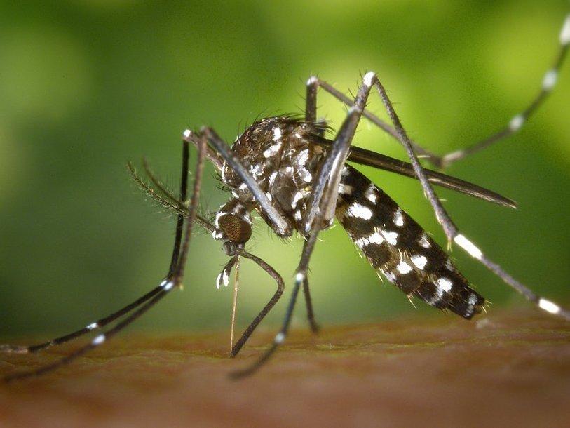 Aedes-albopictus-1_1407643690.jpg.814x610_q85