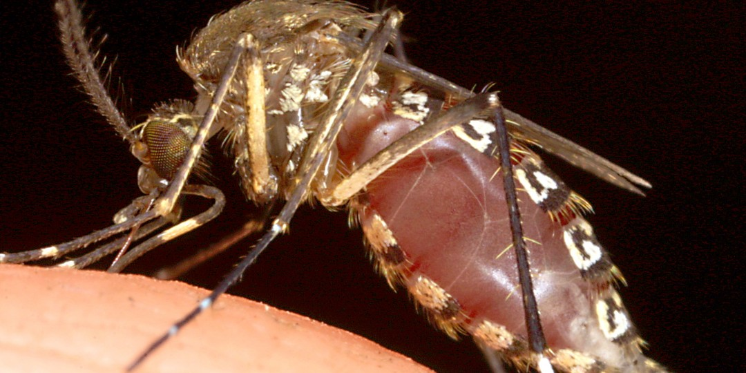13-013823-first_case_of_zika_virus_in_u_s_found_in_texas