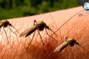 A Multicomponent Animal Virus Isolated from Mosquitoes