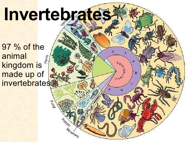 invertebrates-1-728
