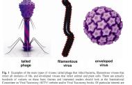 Віруси та інформація
