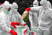У Франції зафіксовано спалах пташиного грипу