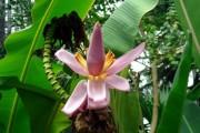 Ендогенні віруси роду Florendovirus родини Caulimoviridae у геномі рослин