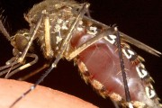 США: зафіксовано перший випадок зараження вірусом Зіка