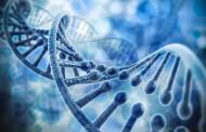 У нашій ДНК приховалося більше вірусів, ніж вважалося раніше