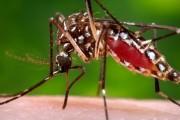 Вірус Зіка за кілька місяців прийде до Європи, – ВООЗ