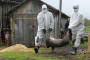 Brazilian Zika virus strain causes birth defects in experimental models