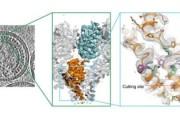 How new HIV drugs lock virus in immaturity