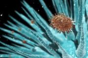 В Україні вперше з 2008 року зафіксували пташиний грип