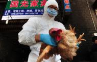 У Китаї поширюється найбільша за 4 роки епідемія пташиного грипу